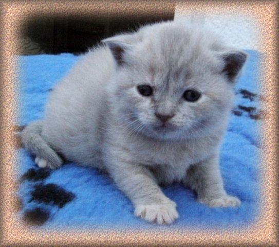 Sitarra im Alter von 3 Wochen